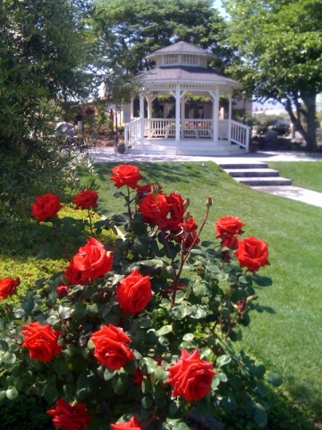 Gazebo and Red Roses